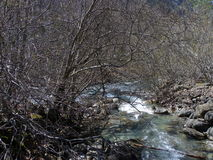 水和树 免版税库存图片