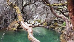 水和树 免版税库存照片