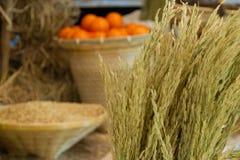 水稻和桔子 免版税库存图片