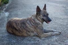 黑和棕色狗 免版税库存照片