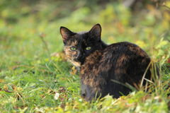 黑和棕色猫 免版税库存图片