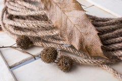 绳索和棕色荚胶囊在一片干燥叶子作为秋天背景 免版税库存照片