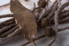 绳索和棕色荚胶囊在一片干燥叶子作为秋天背景 免版税图库摄影