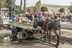 驴和甘蔗推车在地方街市上在开罗埃及 免版税库存图片