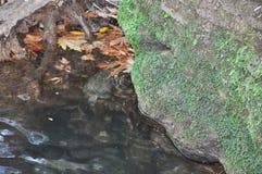 水和生苔石头 库存图片