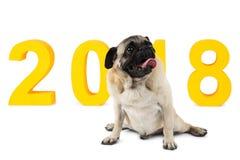和看向上坐与题字的背景的狗2018年 新年的标志 查出 免版税图库摄影
