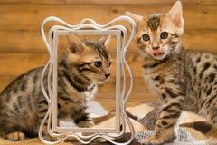 和睦地使用反对照片框架的两只小猫 免版税库存照片