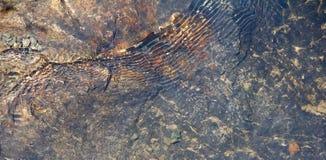 水和石头 库存图片