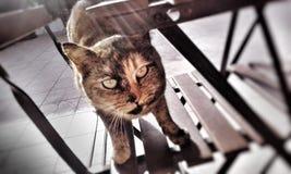 黑和红色猫 免版税库存照片
