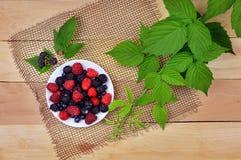 黑和红草莓成熟莓果  免版税库存图片
