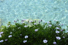 水和花 免版税库存照片