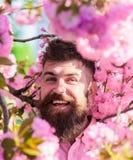 和谐概念 有时髦的理发的有胡子的人与佐仓花背景的 有胡子和髭的人 免版税库存照片