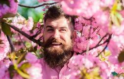 和谐概念 有胡子的在微笑的面孔的人和髭在花附近 桃红色衬衣的行家在佐仓附近分支  库存照片