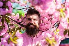 和谐概念 桃红色衬衣的行家在佐仓树附近分支  有时髦的理发的有胡子的人与花  免版税库存照片