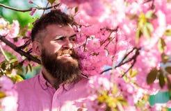 和谐概念 桃红色衬衣的行家在佐仓树附近分支  有近胡子的在微笑的面孔的人和髭 库存图片