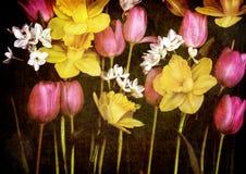 黄水仙和郁金香在黑帆布背景 免版税库存照片