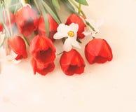 黄水仙和郁金香花束在一木白色batskground 免版税库存照片