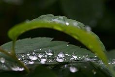 水和雨在叶子,抽象看法,雨水滴滴下在绿色背景/下落的在雨以后的事假 免版税库存照片