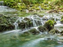 水和青苔 免版税库存图片