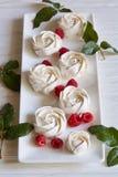 和风白玫瑰在白色背景的 库存图片