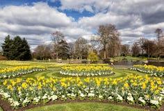 黄水仙和延命菊在公园 库存照片