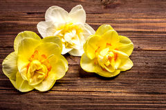 水仙和黄水仙在一个棕色委员会 免版税图库摄影