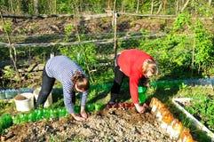 年轻和年长妇女在庭院里工作 库存照片