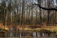 水和forrest在水力研究的荷兰Waterloop Forrest内 免版税库存照片
