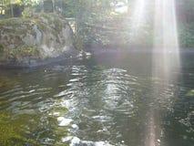 水和vegetaation 库存照片