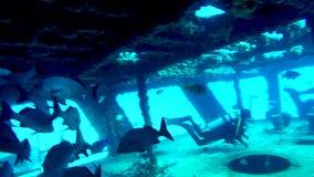 咕噜声鱼学校在C-58的甲板的在坎昆附近击毁 股票录像