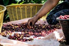 咖啡分类 免版税图库摄影