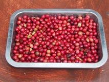 06咖啡危地马拉结构树 免版税库存图片