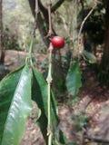 咖啡哥伦比亚自然美好的风景 库存图片