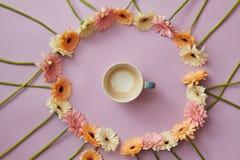 咖啡在大丁草一个圆的框架的在桃红色背景开花 库存图片