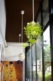 咖啡店的内部和装饰,咖啡馆 免版税库存照片