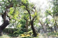 咖啡店的绿色树庭院在清迈 库存图片