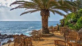 咖啡桌在海滩的一棵棕榈树下 免版税图库摄影