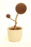 咖啡植物艺术 库存照片