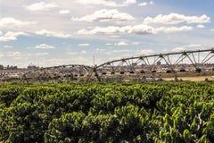 咖啡灌溉 免版税图库摄影