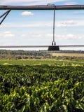 咖啡灌溉 免版税库存照片