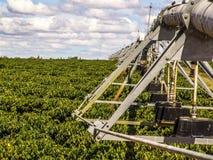 咖啡灌溉 库存图片