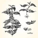 咖啡的手拉的例证 免版税库存照片