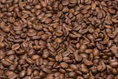 咖啡种子 库存图片