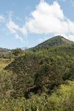 咖啡种植园农场哥斯达黎加 库存照片