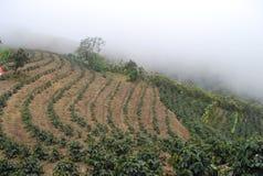 咖啡种植园在哥斯达黎加,中央山谷 免版税库存照片