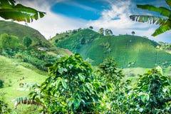 咖啡种植园在Jerico哥伦比亚 库存照片