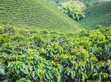 咖啡种植园在Jerico,哥伦比亚 免版税库存图片