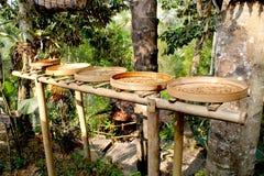 咖啡种植园(Kopi Luwak) 库存图片