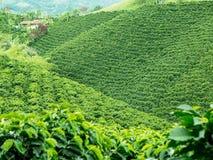 咖啡种植园Jerico,哥伦比亚 库存照片
