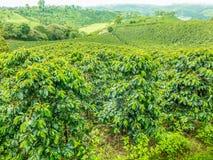 咖啡种植园Jerico,哥伦比亚 图库摄影